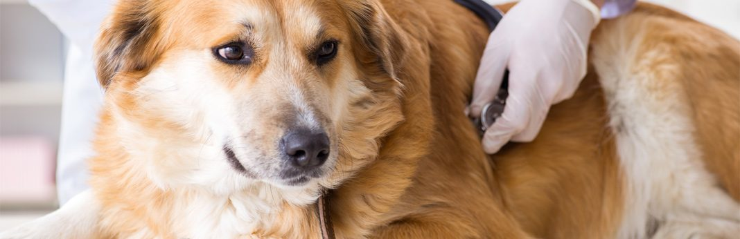 10 reasons your dog might be throwing up