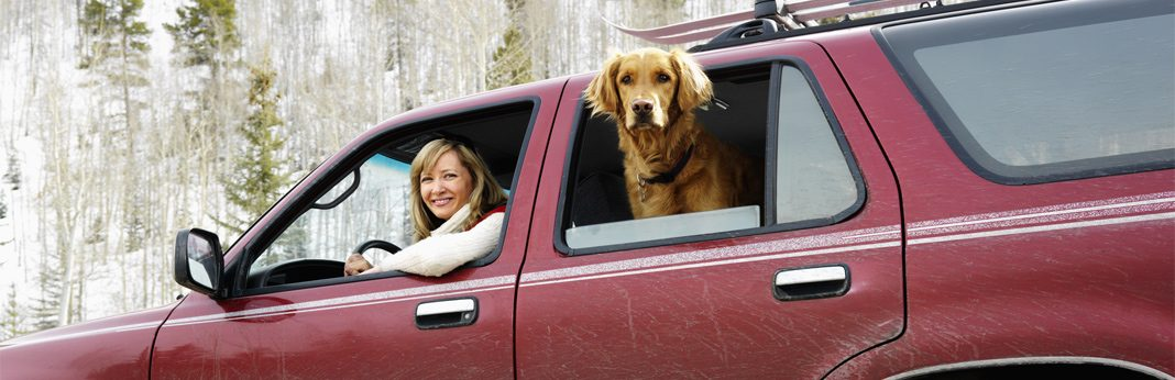 10 tips for taking a road trip with your dog