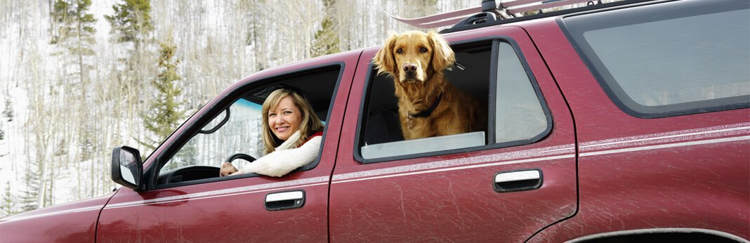 10-tips-for-taking-a-road-trip-with-your-dog