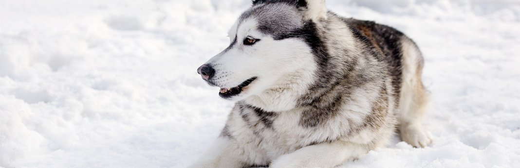 10 ways to keep your dog warm in cold weather