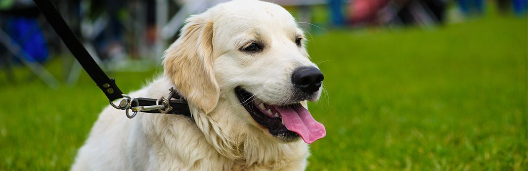8 Steps to Help Build Confidence in Your Dog