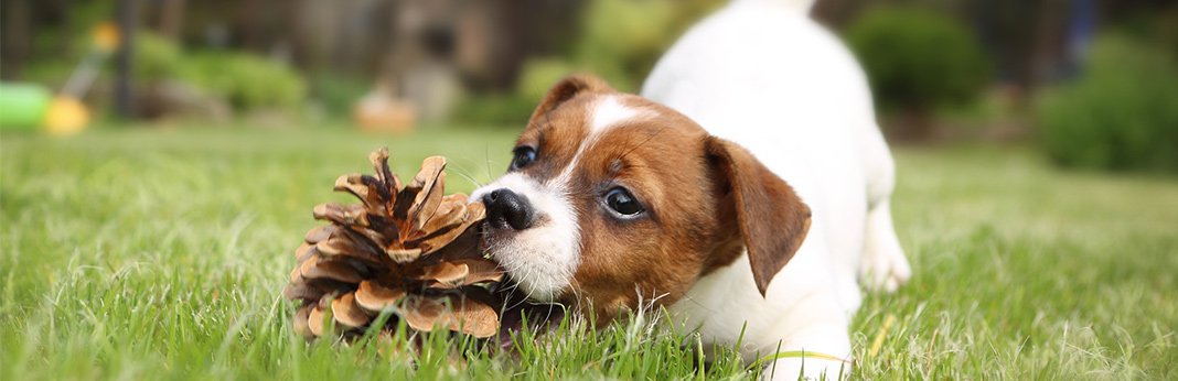 Amazing-Facts-about-a-Dogs-Sense-of-Smell