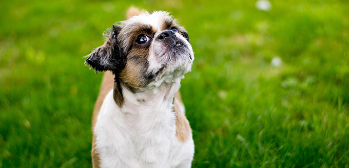 Build Confidence in Your Dog