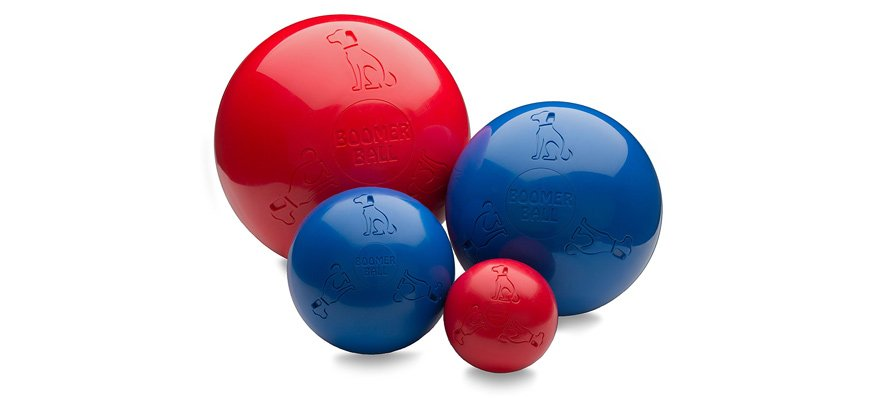 dog herding balls