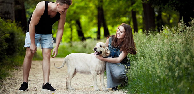 Help Build Confidence in Your Dog