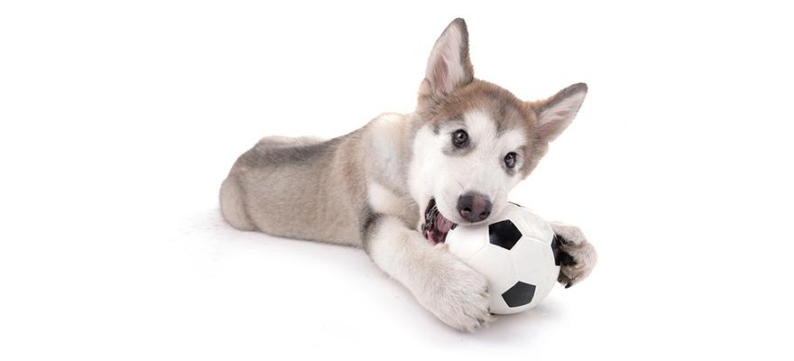Herding Balls for dogs
