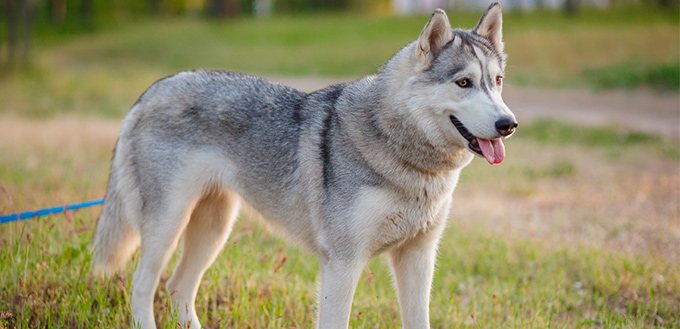 How to Give Cortisone to Your Dog
