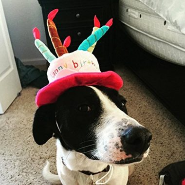 Petzilla Pet Birthday Hat