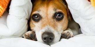 Rat Poisoning in Dogs