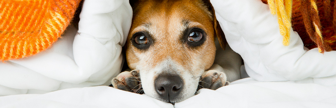 Rat-Poisoning-in-Dogs