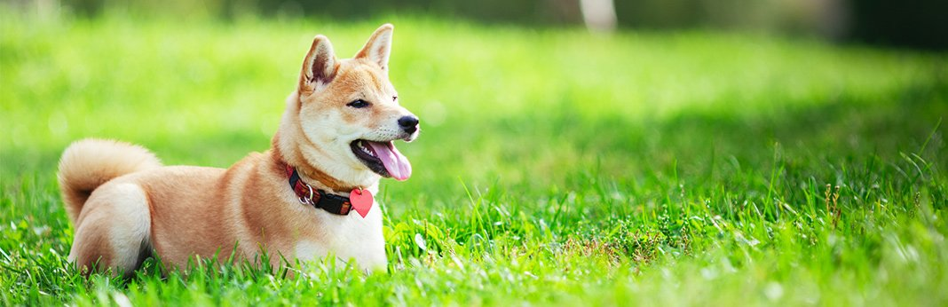 Things-Every-Active-Outdoor-Dog-Needs-to-Be-Happy-and-Healthy