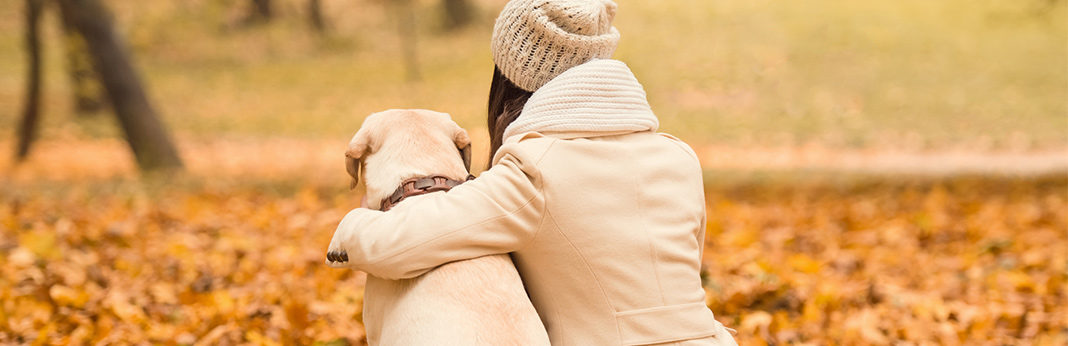 tips on improving end of life care for dogs