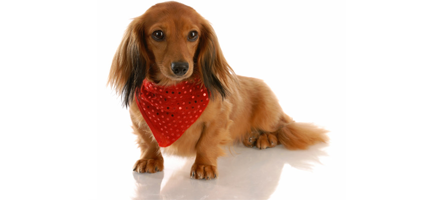 bandana for dogs