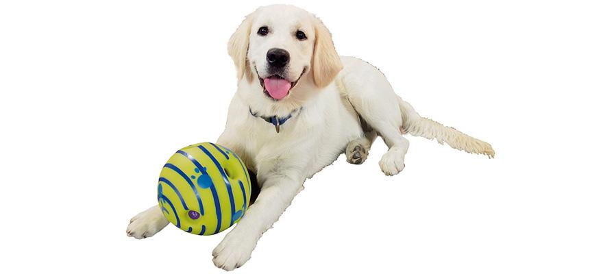 blind dog toys