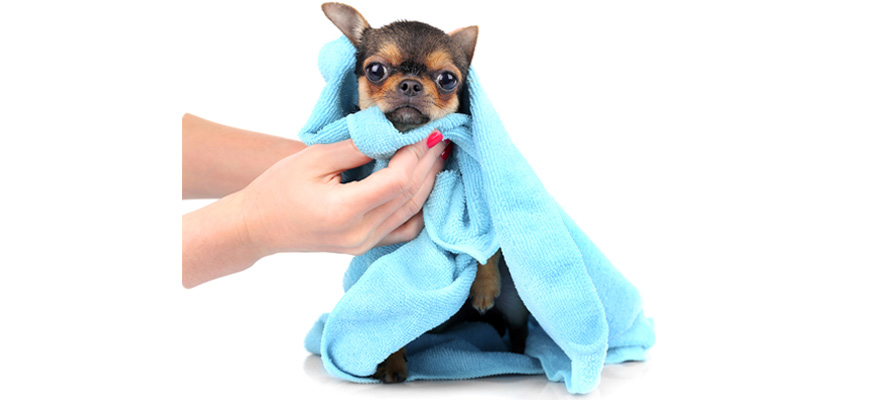 dog drying towel