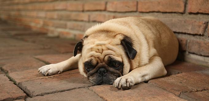 dog guilt