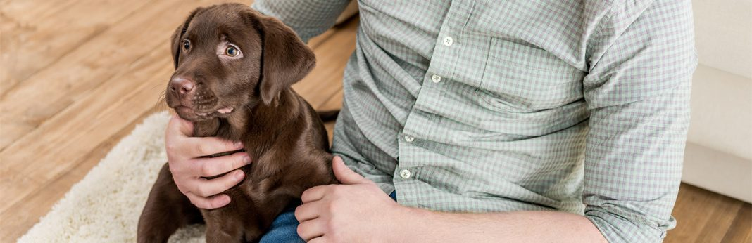 essential guide to puppy proofing your home
