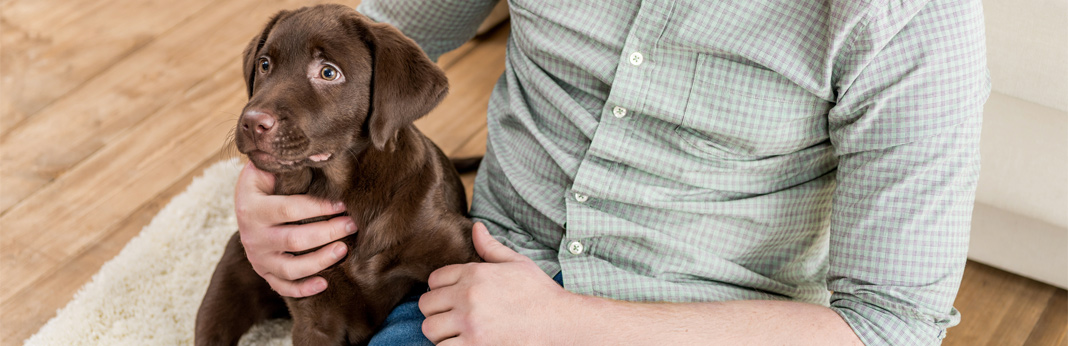 essential-guide-to-puppy-proofing-your-home