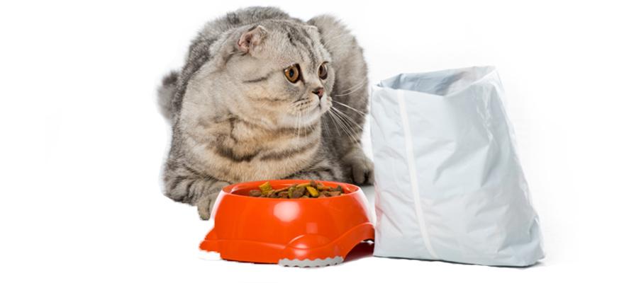 hypoallergenic cat foods