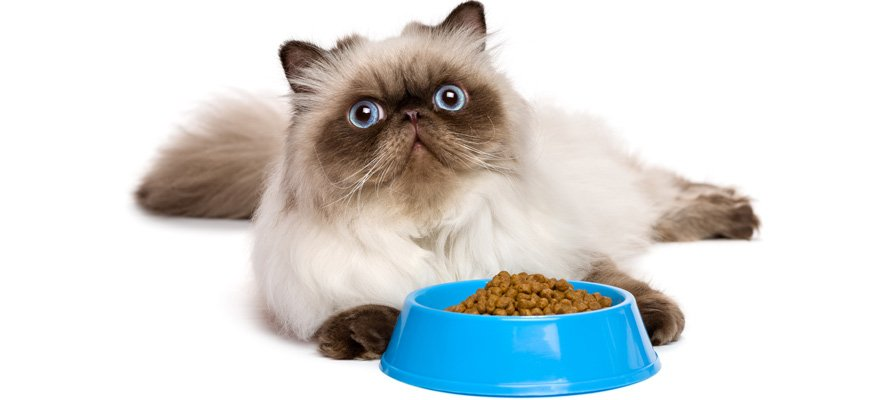 hypoallergenic food for cats