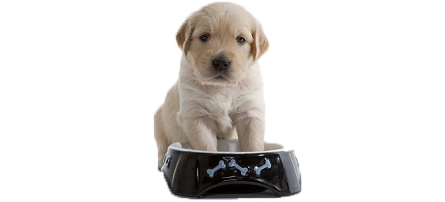 iams dog foods