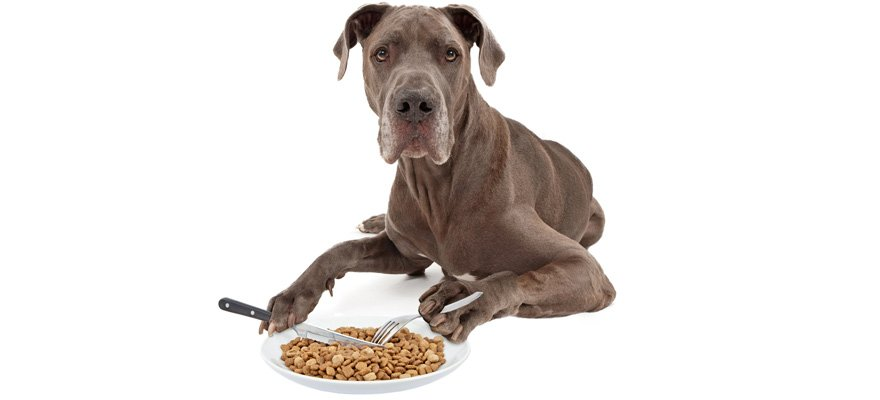 natural balance canine food