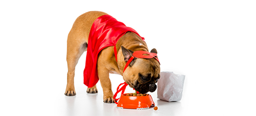 wellness dog foods