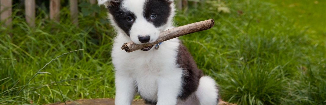 10-fun-and-easy-puppy-games