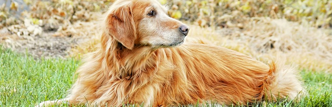 10 simple tricks for picking up dog hair