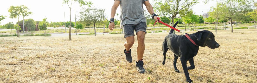 15-amazing-dog-walk-tips