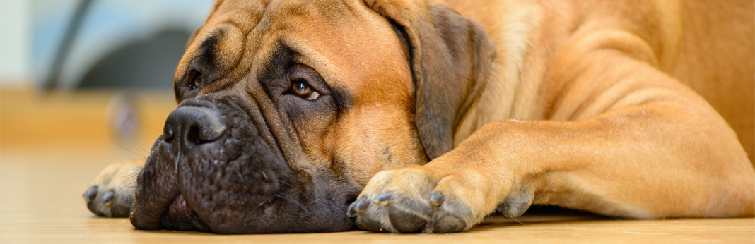15-ways-to-relieve-your-dog's-boredom