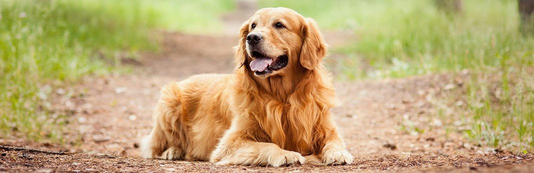 aftercare-tips-for-a-neutered-dog