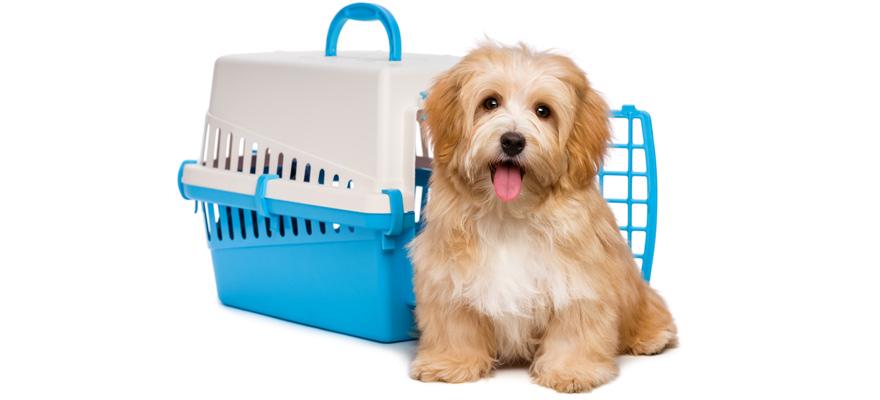 airplane dog crates