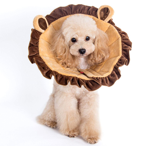 Petoga Couture Alfie Pet