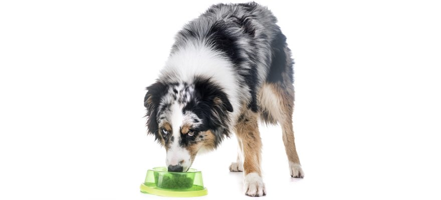 Best Dog Foods For Australian Shepherds Reviewed In 2019
