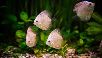 best aquarium hoods