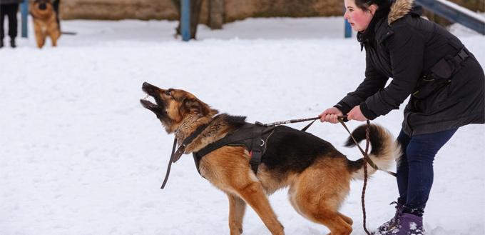 big dogs are more aggressive
