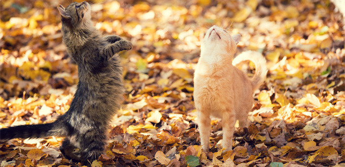 cats chattering at birds