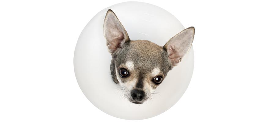 dog cones