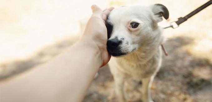 dog facing their fear