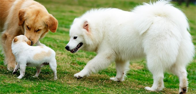 dog humping another dog