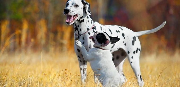 dog humping