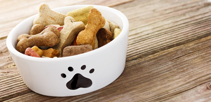 hiding puppy food around the house