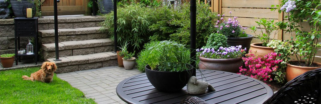 how-to-plant-a-dog-friendly-garden