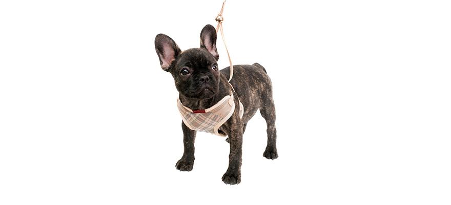 lift harness dog 2