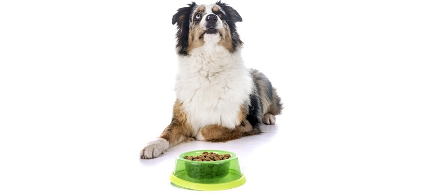 natural variety food for dogs