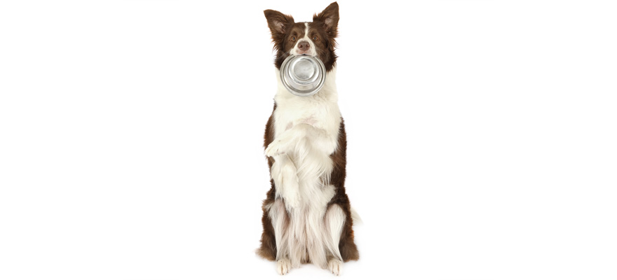 nutrisca dog foods