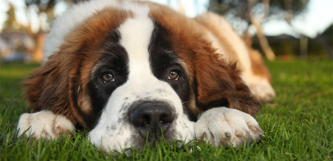 Signs your Dog Is Dying From Cancer