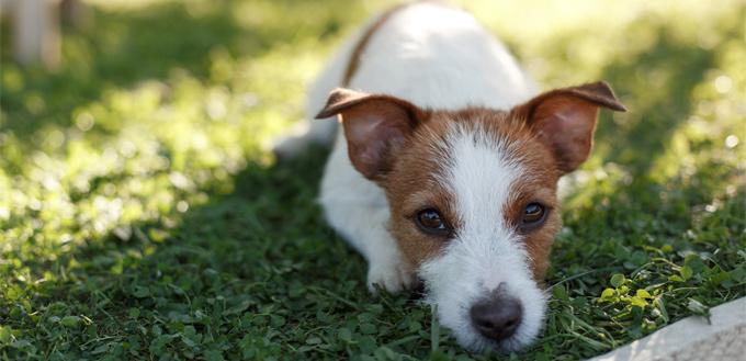 puppies recall trainings
