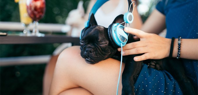 puppy enjoying the sound of a music